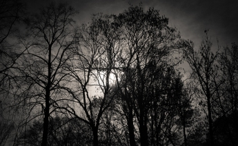 Drzewo Krzyża / The tree of a cross