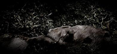 Przeczucie śmierci / Premonition of Death